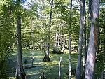 Swampwater_image